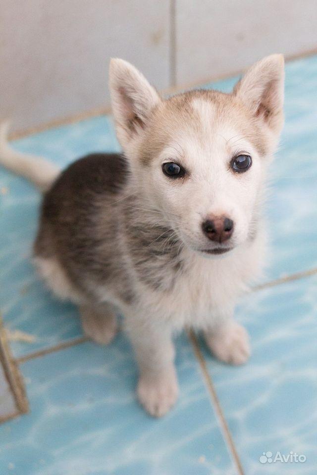 Спасите щенкам жизнь
