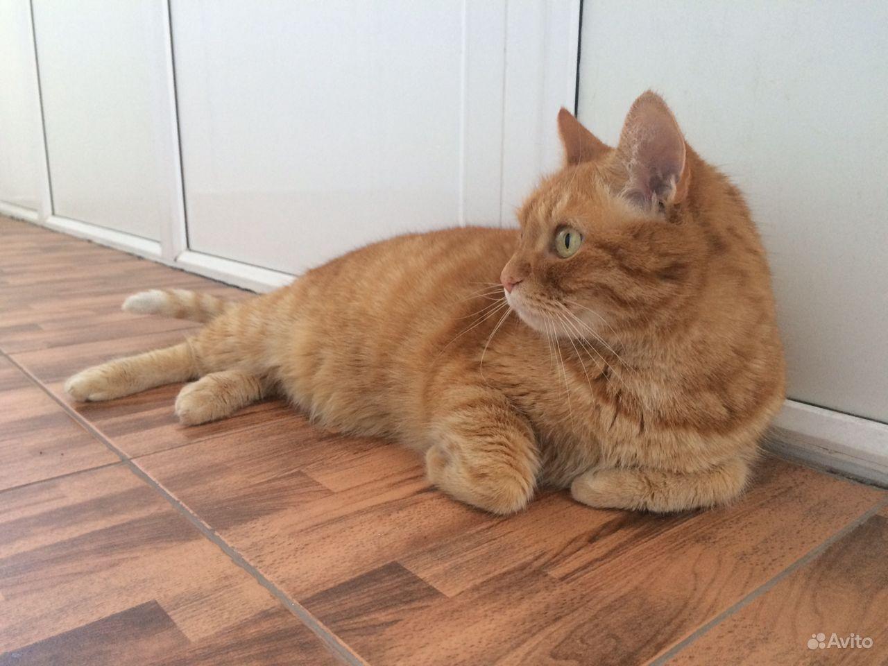 Кот в добрые руки в Нижнем Новгороде - фотография № 2