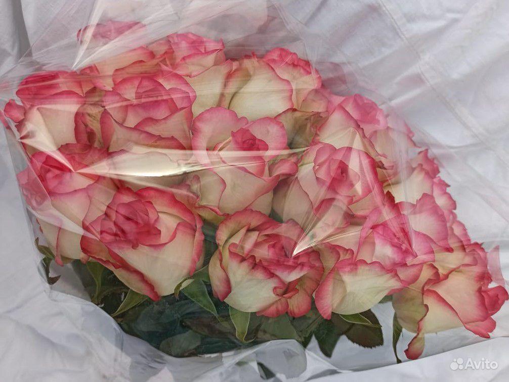 Роза местная Джумилия купить на Зозу.ру - фотография № 6