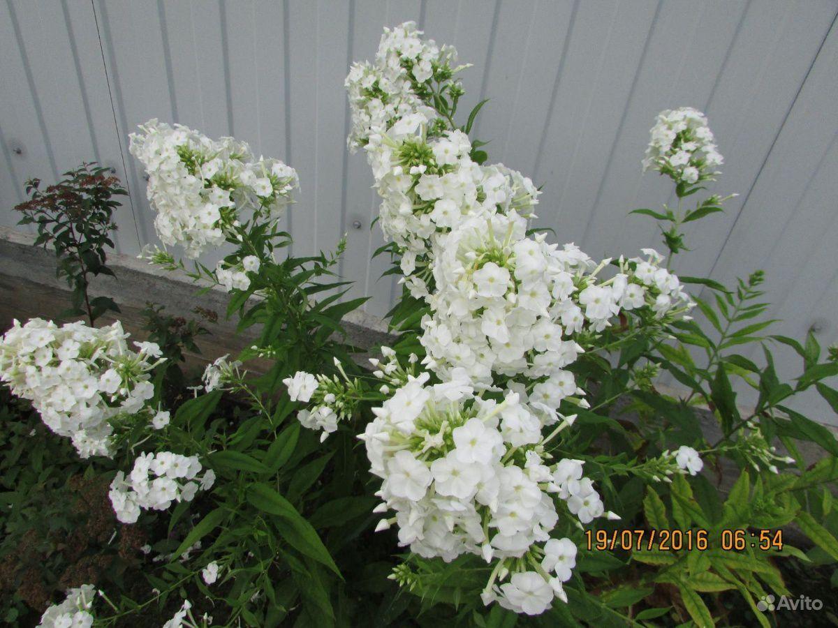 Цветы купить на Зозу.ру - фотография № 9