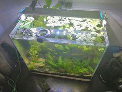 Продам готовый и оформленный аквариум
