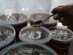 Мёд с Горного Чарыша