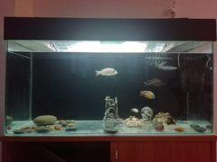 Аквариум 230л. с рыбами и тумбой
