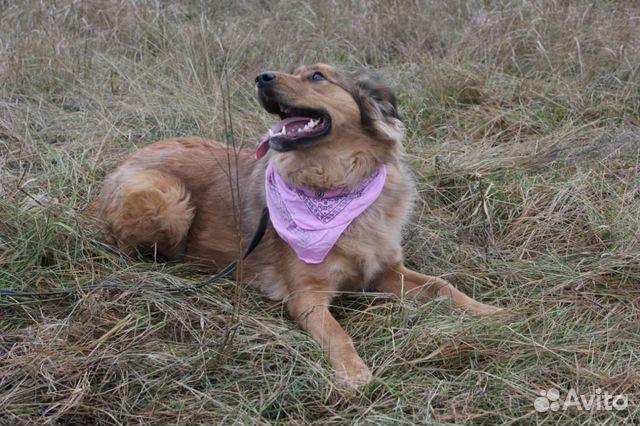 Собака из приюта в дар купить на Зозу.ру - фотография № 9