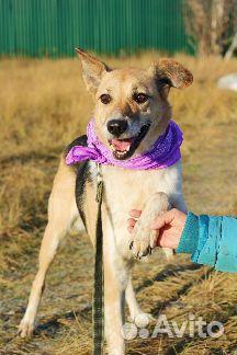 Необыкновенная собака в дар купить на Зозу.ру - фотография № 1