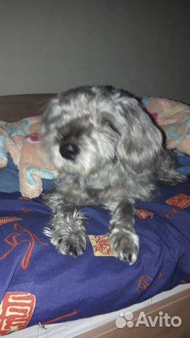 Собачка в добрые ручки купить на Зозу.ру - фотография № 2