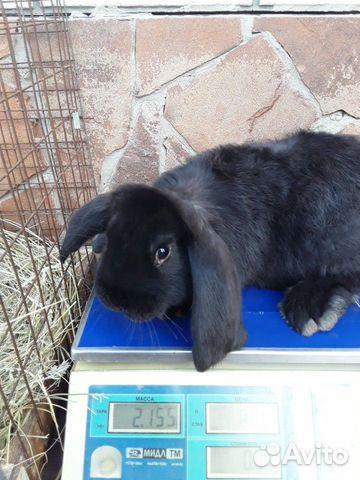 Кролики 89202417955 купить 4