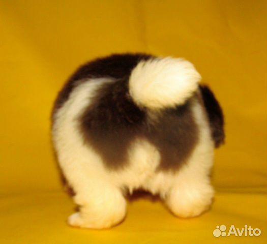 Puppies 89040704100 buy 1