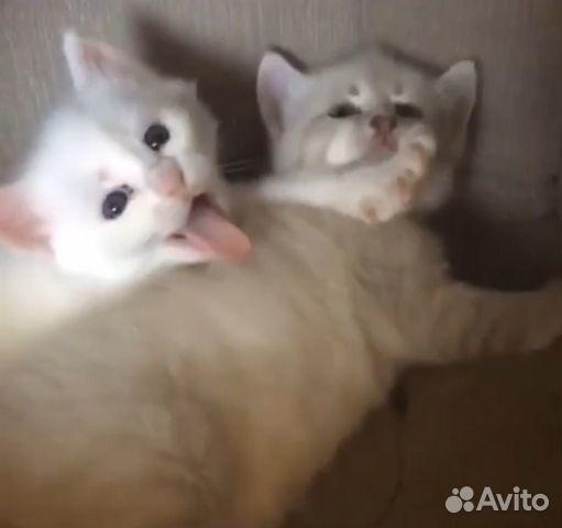 Кошка  купить 3