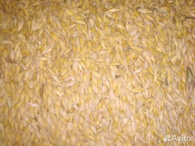 Зерно (ячмень, пшеница)  купить 1