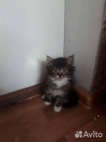 Котенки  89011211352 купить 4
