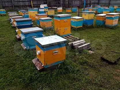 Продам пчёл (Пчелосемьи без улья)