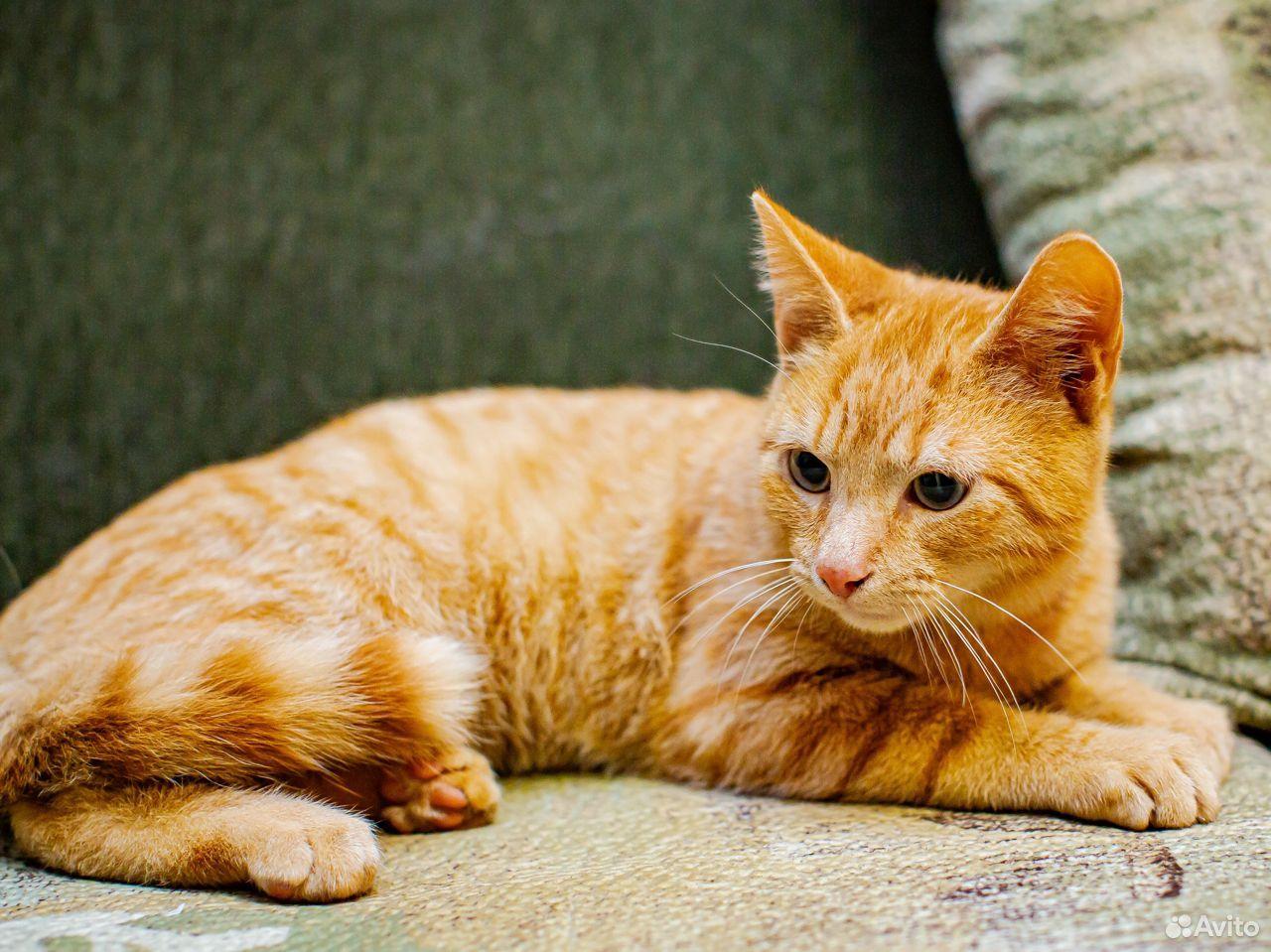 Котик-подросток Проша в добрые руки