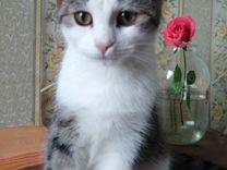 Милый котенок девочка ищет дом