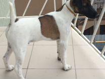 Пропала собака — Собаки в Геленджике