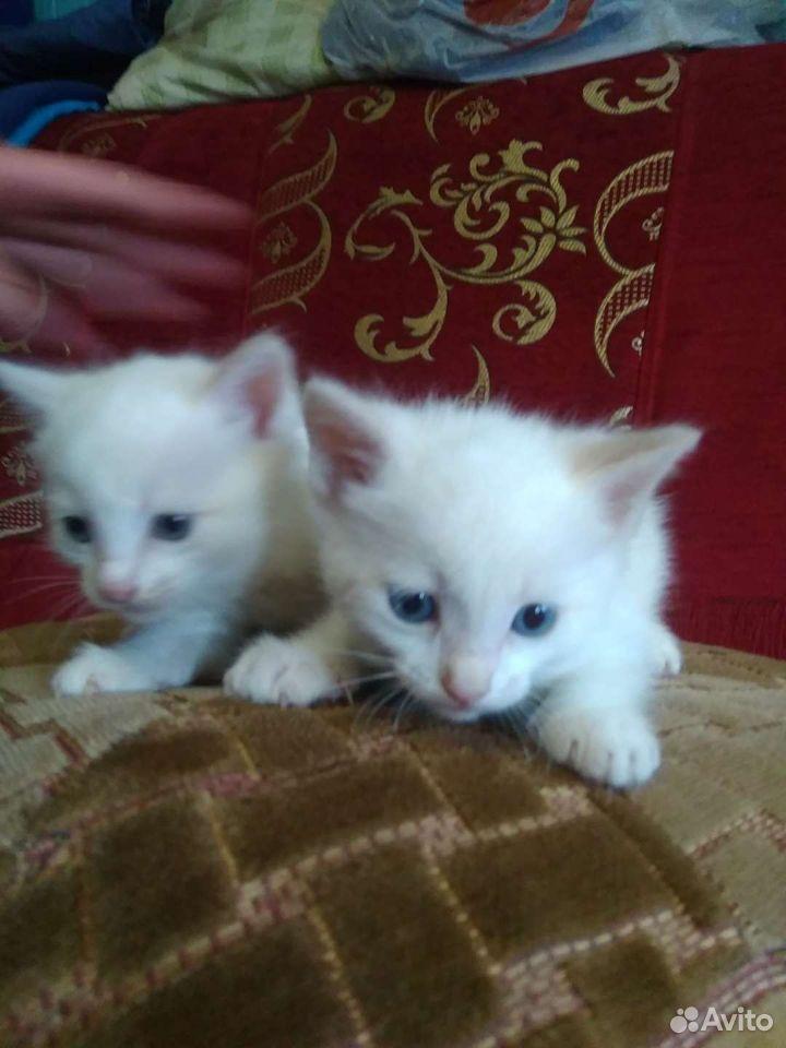 Котята. Мальчик и девочка  89101929687 купить 1