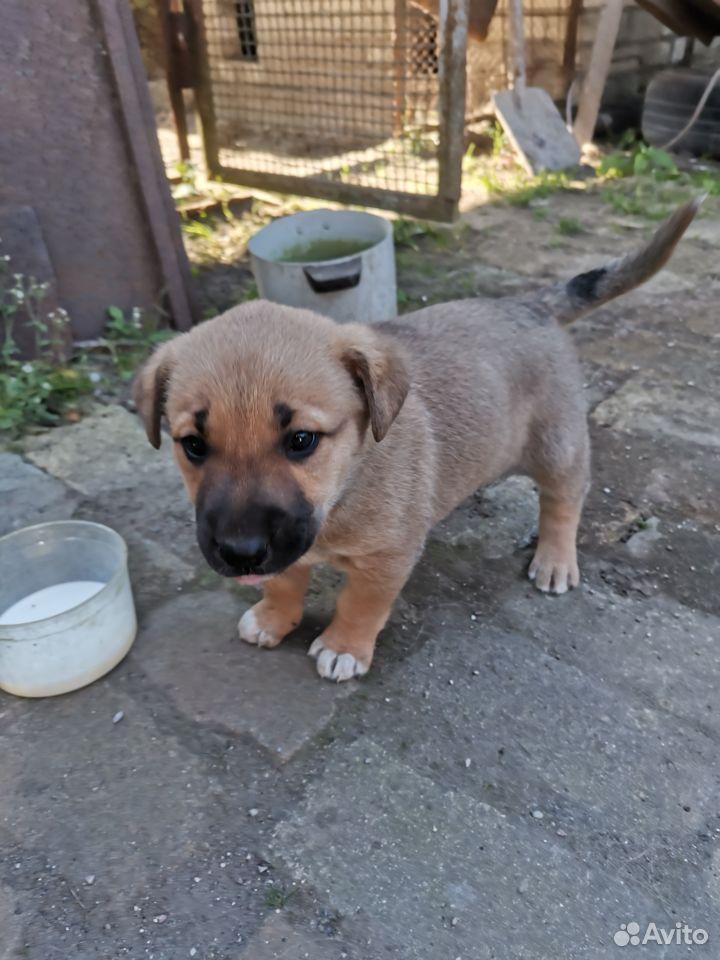 Собака  89118676240 купить 3