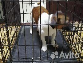 Клетка для собак кошек.Клетка для животных.Разные  89697775155 купить 1