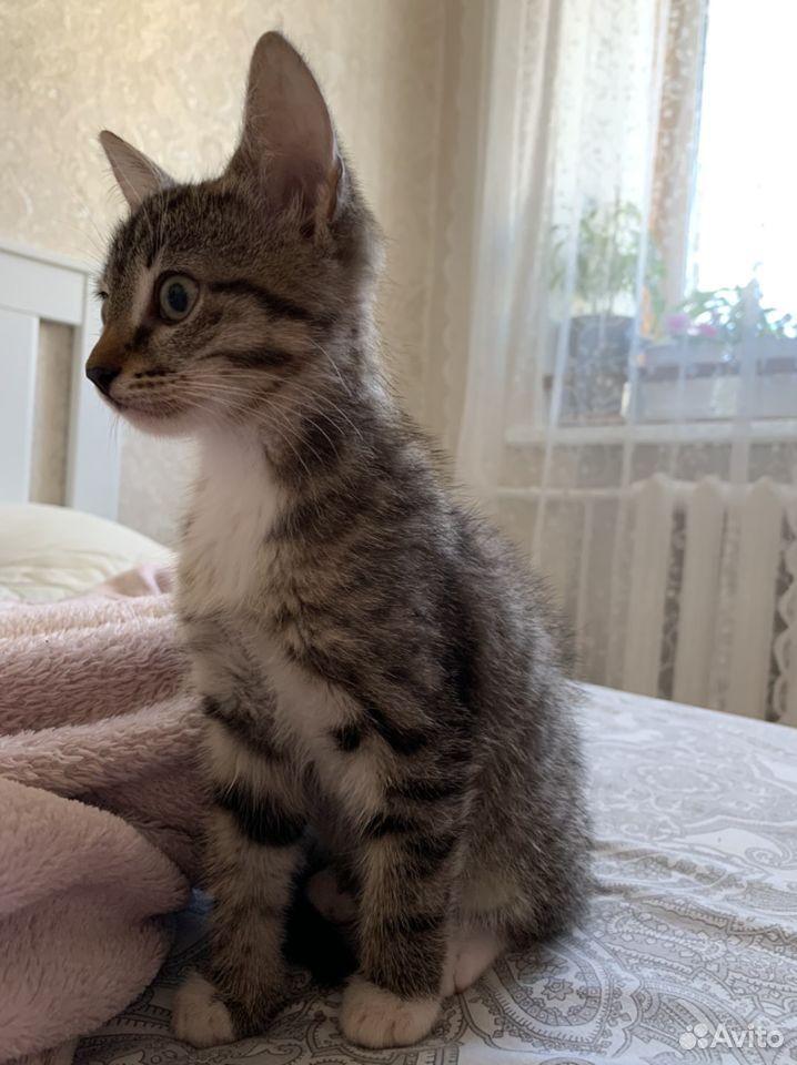 Котенок  89371602502 купить 1