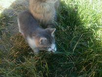 Котята 1,5мес