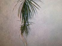 Юкка-семейство агавовых — Растения в Екатеринбурге
