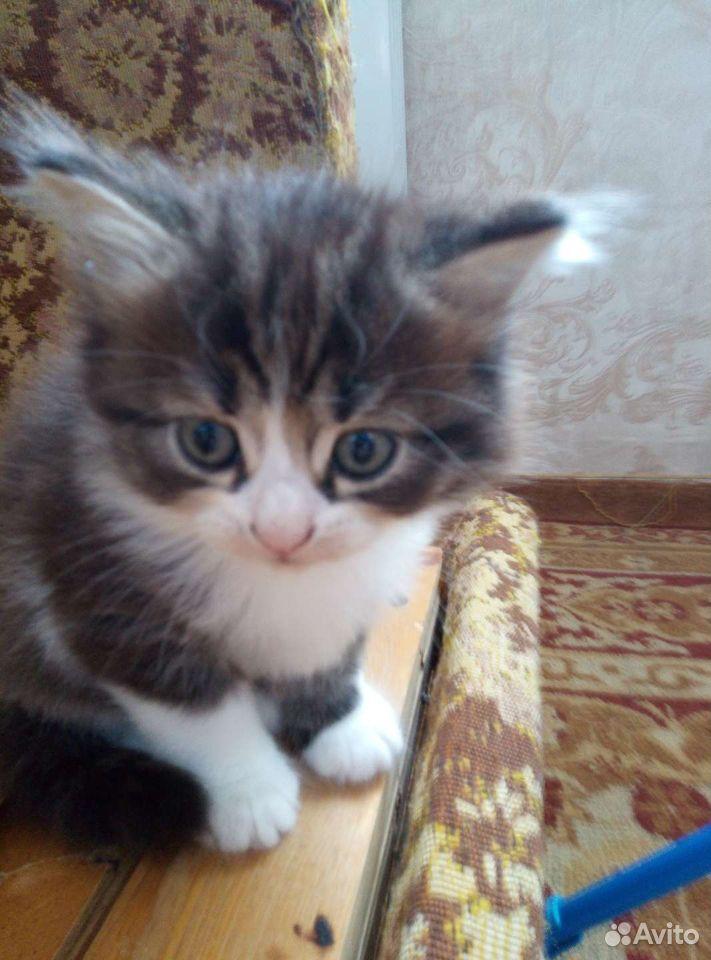Котята  89125769108 купить 3