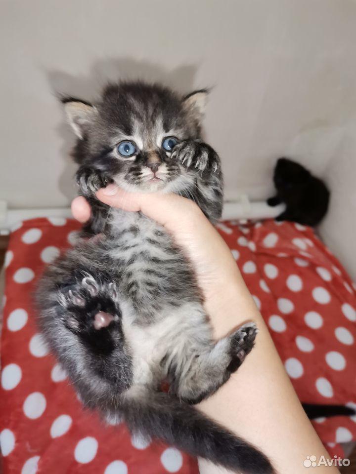 Отдам котят  89667436788 купить 4