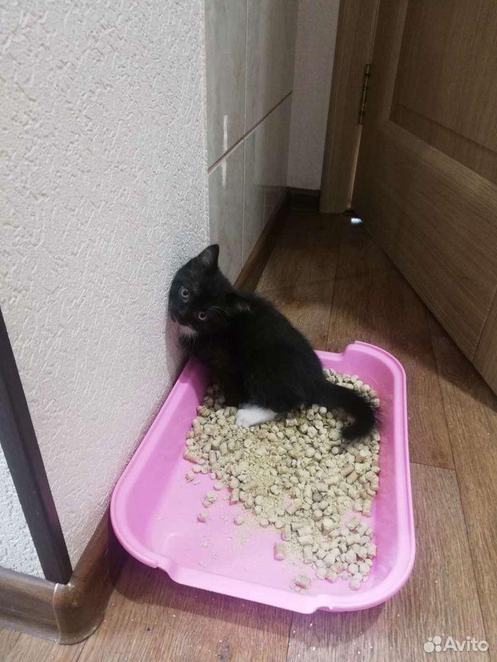 Котенок девочка  89831883735 купить 4