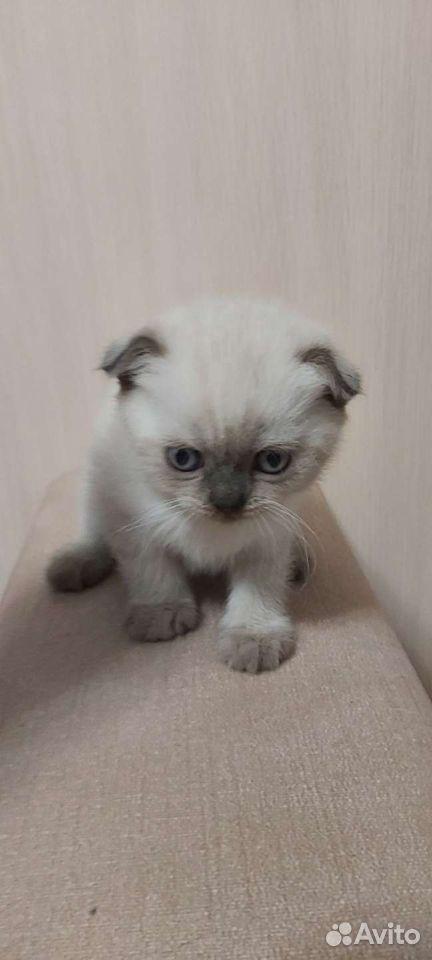 Кошка  89108547779 купить 1