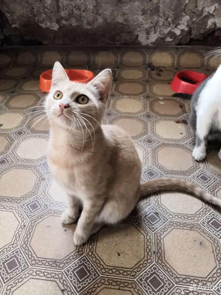 Котики ищут добрые руки  89102186335 купить 10